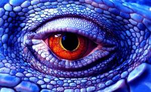 эволюцию глаза
